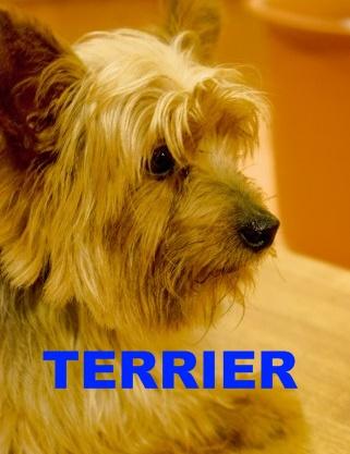 英単語増殖法terrier